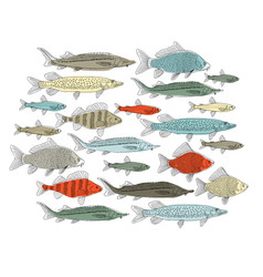 fish collection sketch for your design vector image