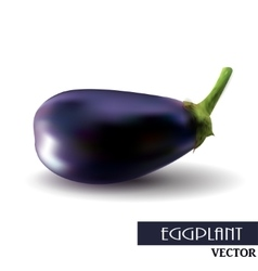 One fresh eggplant over white background vector image