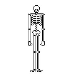 skeleton pixel art skull and bone 8 bit vector image