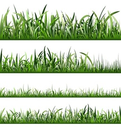 Grass vector image vector image