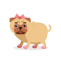 funny pug dog character in pink bow and shoes vector image
