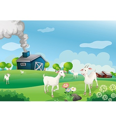 A farm with many goats vector