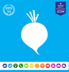 Beet root icon vector