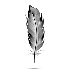 black and white big fluffy feather vector image vector image