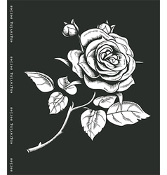 Hand sketched white rose in engraving style vector image vector image