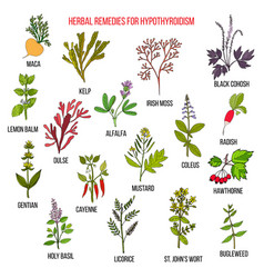 Best herbal remedies for hypothyroidism vector