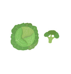 green cabbage and broccoli vector image