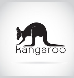 kangaroo on white background wild animals vector image