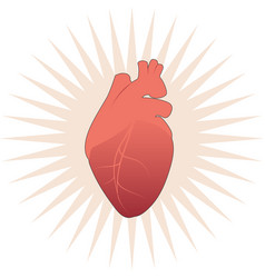 Realistic stylized human heart on star and white vector