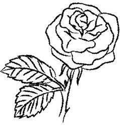 line drawing of rose -simple line vector image