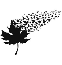birds flying away maple leaf vector image