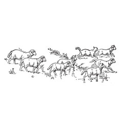 Eight sheep vintage vector