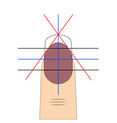 nail shape drawing diagram template to vector image