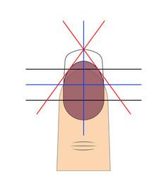 Nail shape drawing diagram template vector