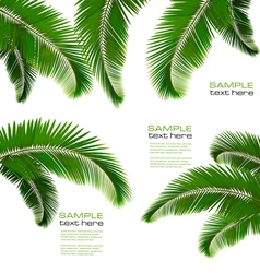 Palm leaves vector