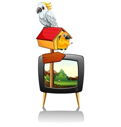 Parrots on television screen vector