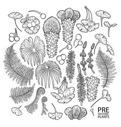 collection prehistoric plants vector image