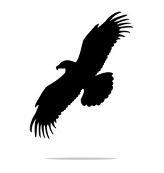 Eagle bird black silhouette animal vector