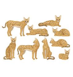 flat set of african serval graceful wild vector image