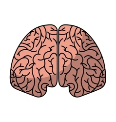 human brain organ isolated icon vector image