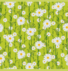 seamless pattern from field chamomiles vector image