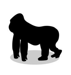 gorilla monkey primate black silhouette animal vector image vector image