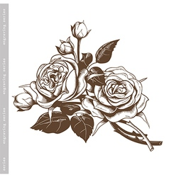 Hand sketched vintage bouquet of white roses vector image vector image