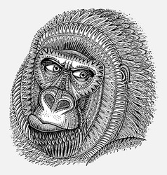 Patterned head of the gorilla in graphic style vector image