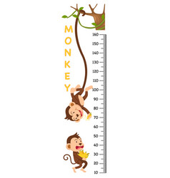 meter wall with monkey vector image