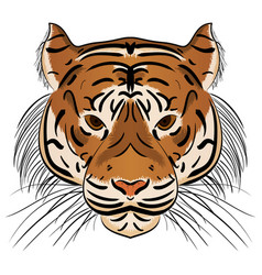 Head ferocious tiger vector