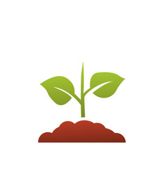 seedling icon growing tree green agriculture vector image
