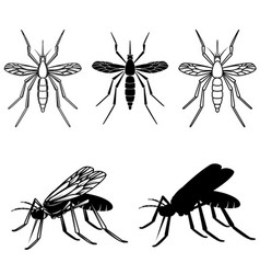 set of mosquito design element for logo label vector image