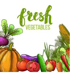 Vegetables colorful sketch vector