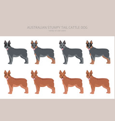 Australian stumpy tail cattle dog all colours vector