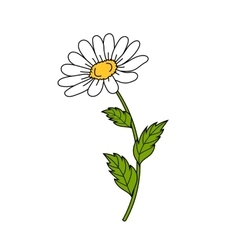 Beautiful daisy on white background vector