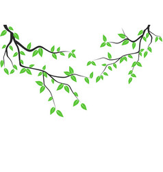 green leaves tree branch vector image