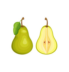 green pear whole and half vector image