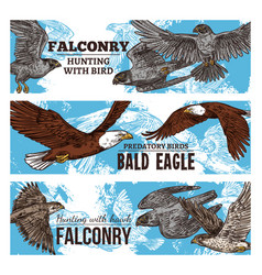 predatory eagle and hawk birds falconry wild hunt vector image
