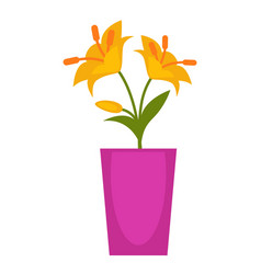 yellow flowers in violet flowerpot isolated on vector image vector image
