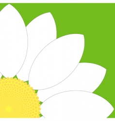 white flower quarter vector image