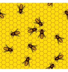 Bee on honeycomb pattern vector