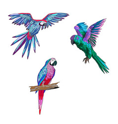 Color seth from parrots in vector