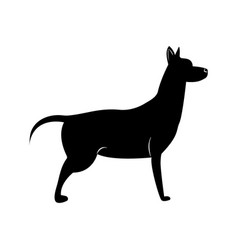 dog symbol of the new 2018 year vector image