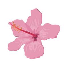 Hibiscus flower flat tropical exotic vector
