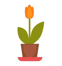 Orange tulip plant in flowerpot colorful vector