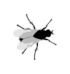 silhouette of a fly on white background vector image