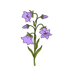bell flowers vector image