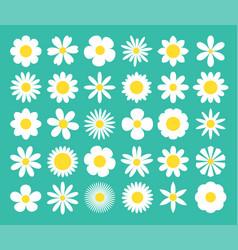 Camomile super big set white daisy chamomile icon vector