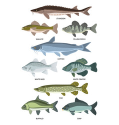 collection of different kinds of freshwater vector image