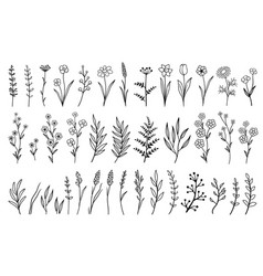 Hand drawn isolated flowers and herbs vector